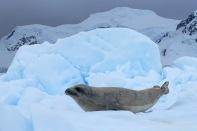 antarctica_klein-100