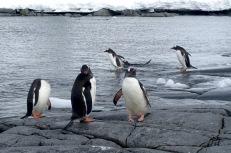 antarctica_klein-112