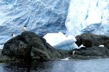 antarctica_klein-126