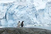 antarctica_klein-127