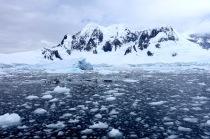 antarctica_klein-129