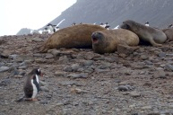 antarctica_klein-15