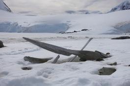 antarctica_klein-152