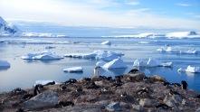 antarctica_klein-166