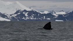 antarctica_klein-177