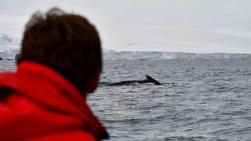 antarctica_klein-178