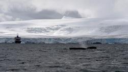 antarctica_klein-179