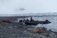 antarctica_klein-18