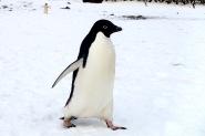 antarctica_klein-187