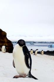 antarctica_klein-188