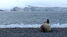 antarctica_klein-20