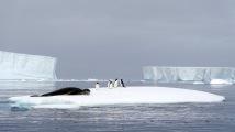 antarctica_klein-203