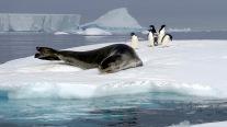 antarctica_klein-204