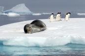 antarctica_klein-206