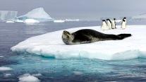 antarctica_klein-208