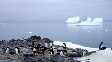 antarctica_klein-210