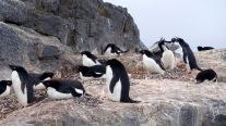 antarctica_klein-211