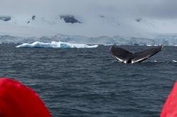 antarctica_klein-23