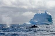 antarctica_klein-24