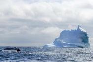 antarctica_klein-25