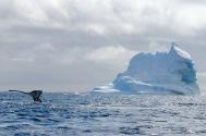 antarctica_klein-26