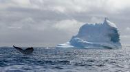 antarctica_klein-27