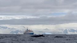 antarctica_klein-34