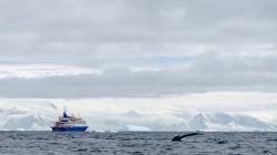 antarctica_klein-35