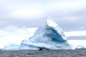 antarctica_klein-37