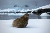 antarctica_klein-43