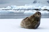 antarctica_klein-44