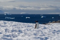 antarctica_klein-58
