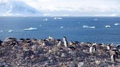 antarctica_klein-59
