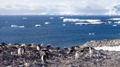 antarctica_klein-60