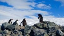 antarctica_klein-61