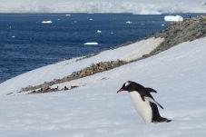 antarctica_klein-69