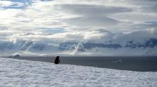 antarctica_klein-70