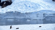 antarctica_klein-73