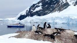antarctica_klein-77