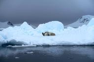 antarctica_klein-98