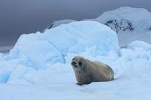 antarctica_klein-99