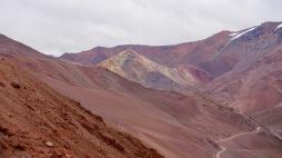 Vicuna bis Salta - 15