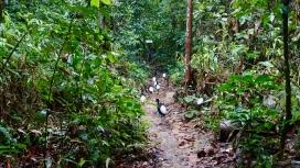 Dschungel - 17