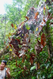 Dschungel - 18