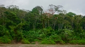 Dschungel - 19