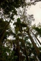 Dschungel - 24