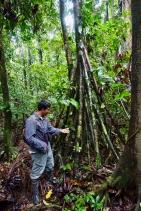 Dschungel - 25