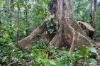 Dschungel - 26