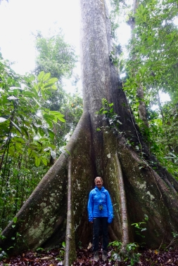 Dschungel - 27