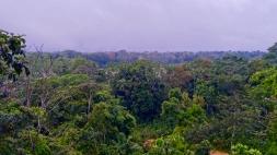 Dschungel - 28
